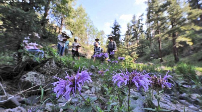 Monsoon-Enlivened Edible and Medicinal Plant Walk with Charles W. Kane (8/7/2021)