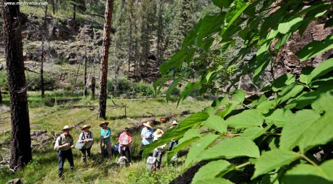 Monsoon-Enlivened Edible and Medicinal Plant Walk with Charles W. Kane (8/21/2021)