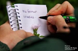 Geranium richardsonii (Richardson's geranium)