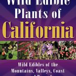 Hydrocotyle verticillata | Marsh pennywort | Edible Uses