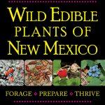 Pinus edulis | Two-needle pinyon pine | Edible Uses