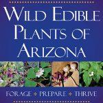 Plantago major | Plantain | Edible Uses