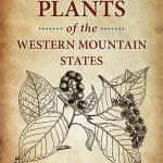 Plantago major | Plantain | Medicinal Uses